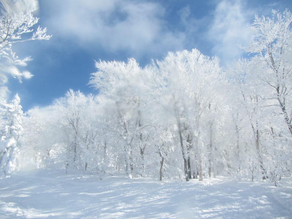 ブナ林のキラキラ樹氷